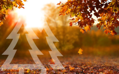 Top 10 Places to Photograph Fall Leaves in and Around Redmond, WA