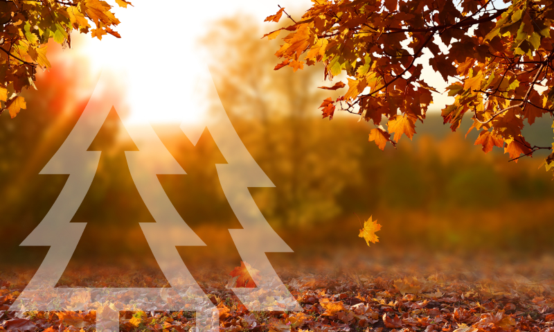 Places to enjoy the beautiful fall leaves in Redmond